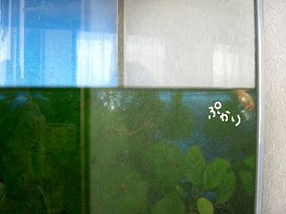 yappauki-2.jpg