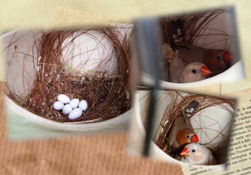 オレンジ抱卵中