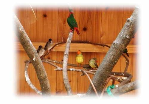禽舎で同居