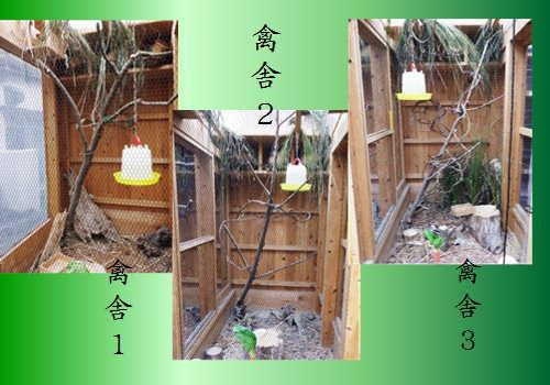 禽舎123