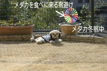 leo-royのブログ