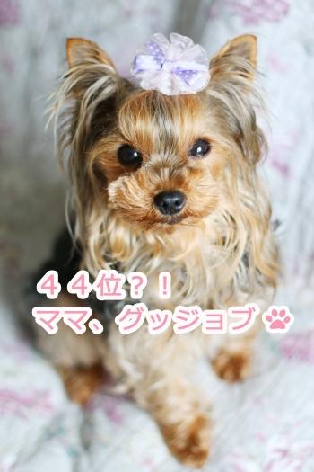 IMG_4481s.jpg