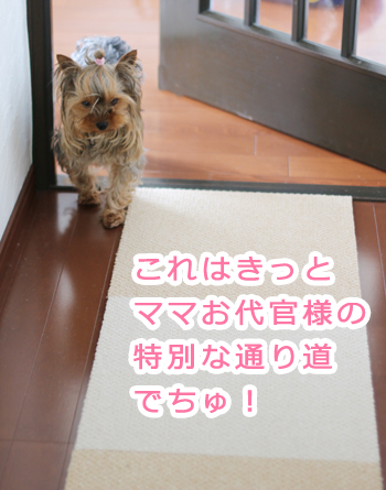 IMG_5154_2.jpg