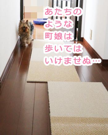 IMG_5154_3.jpg