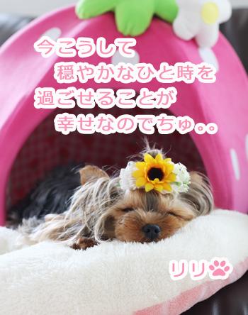 IMG_7159b.jpg