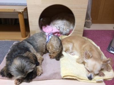 太郎と他3匹