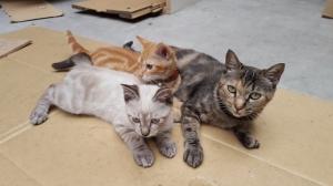 ジュンと2匹の子供たち