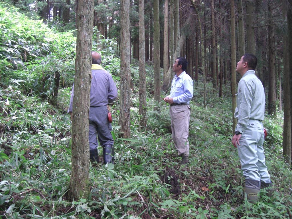 松田林産 床柱生産の林内写真