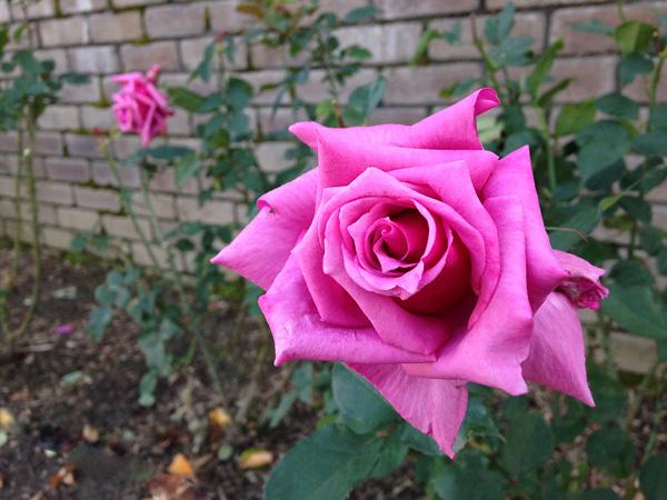 IMG_4635-20151127.jpg
