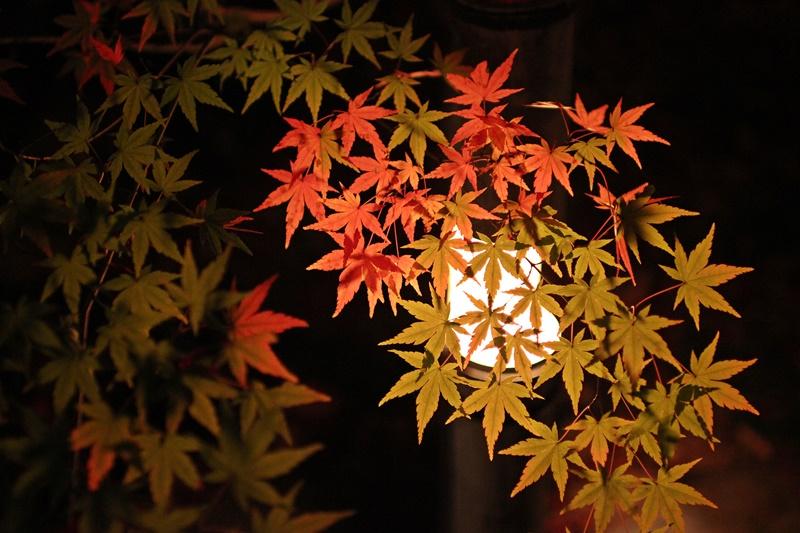 2015-11-23 nobunobuno (25)