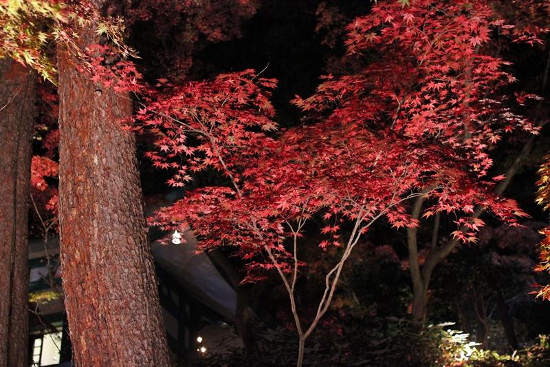 2015-11-23 nobunobuno (57)