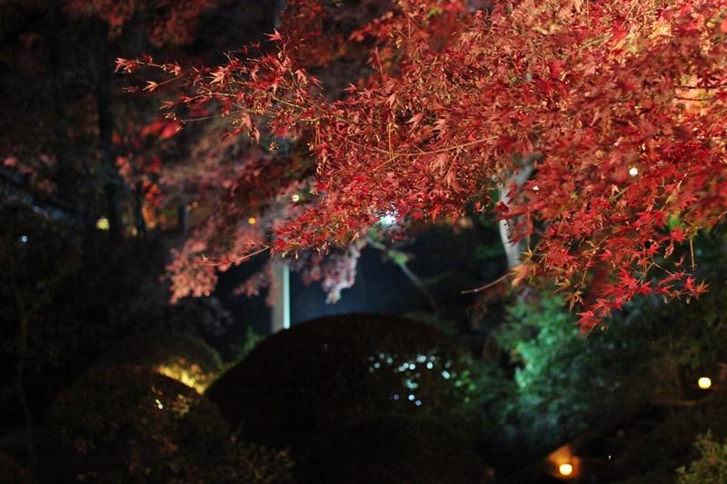 2015-11-23 nobunobuno (59)