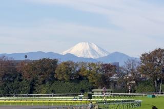 競馬場から望む富士