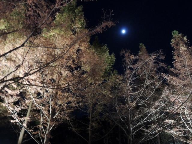 N6676月夜