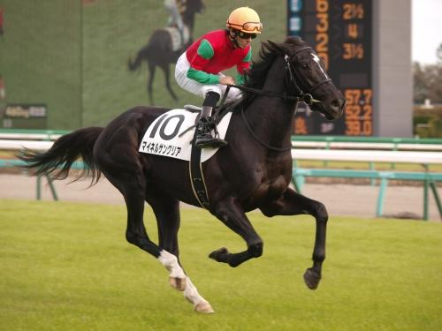 マイネルサングリア、返し馬