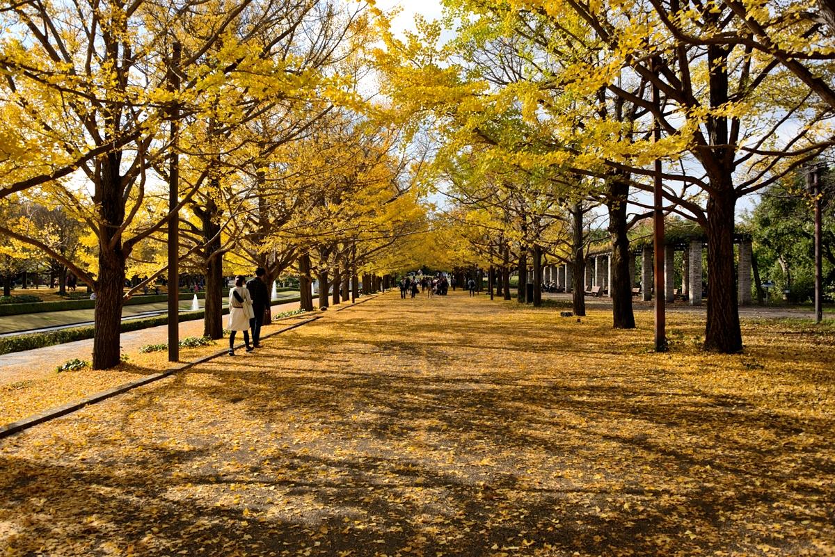 昭和記念公園_