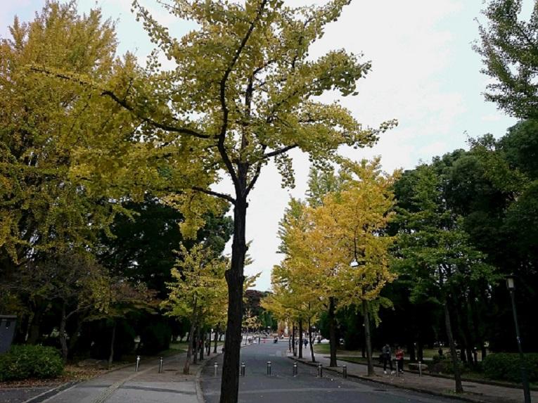 DSC_0283銀杏
