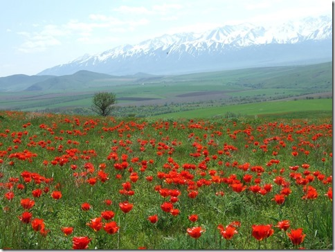 【世界の快道でイク!:番外・カザフスタン編】天空のシルクロードに花開く野生のチューリップたち01