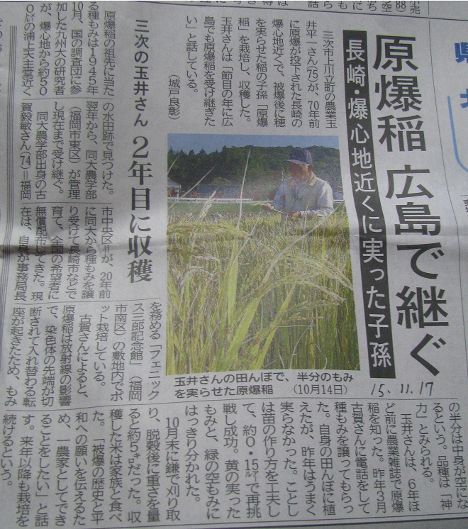 IMG_1094原爆稲