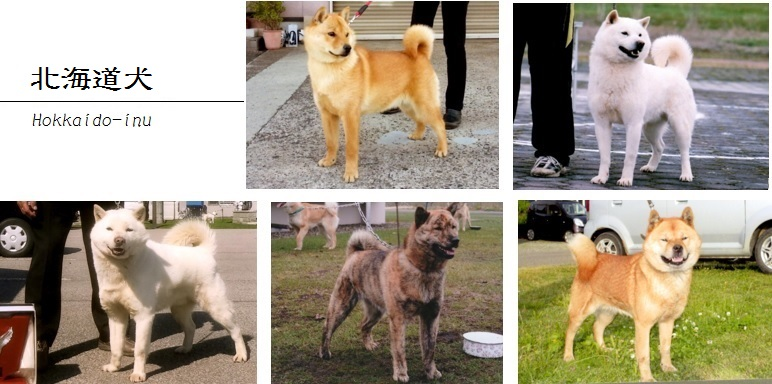 北海道犬画像02