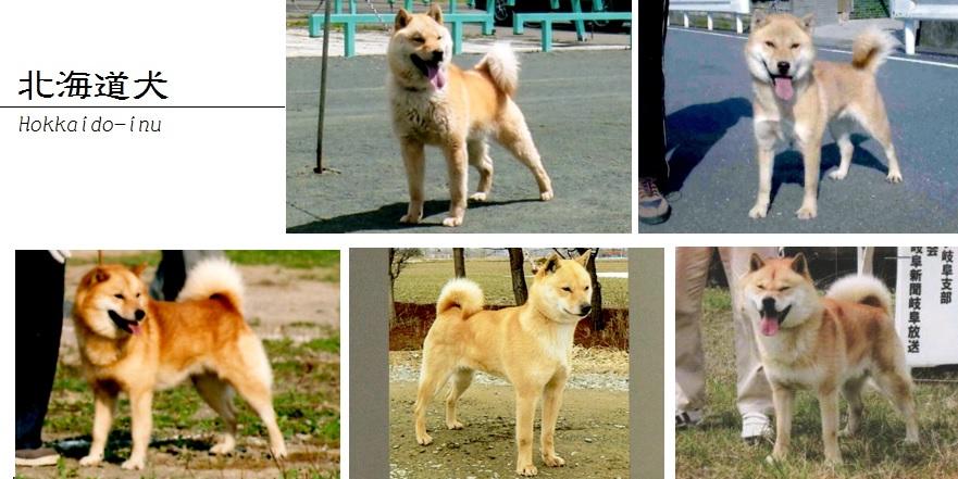 北海道犬画像03