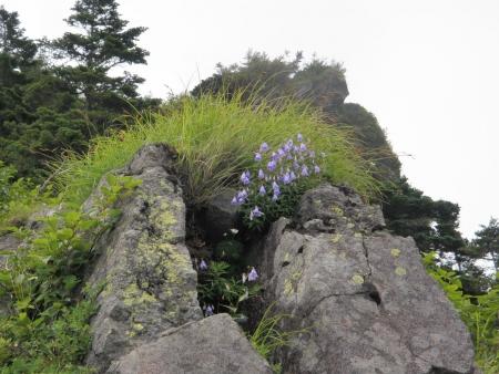 ヒメシャジン130803黒斑山s