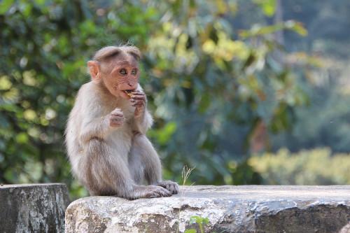 monkey-1028658_960_720.jpg