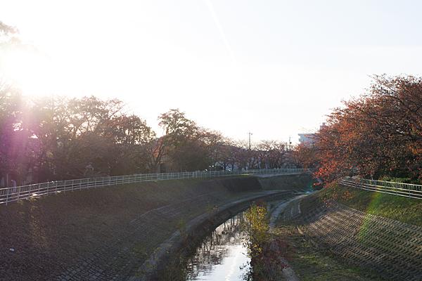 香流川桜紅葉
