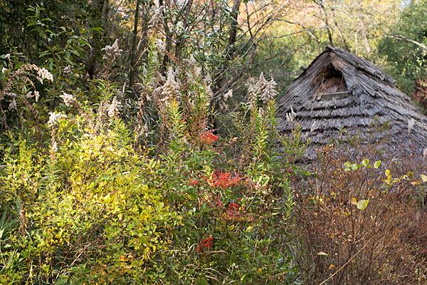 秋の草花とかやぶき屋根