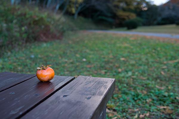 ベンチに柿