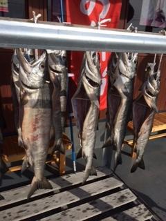 新巻鮭づくり2