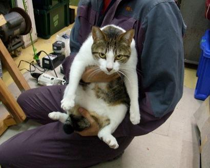 大田区 池上 パンタレイ panta rhei 猫 ねこ ギャラリー 装身具