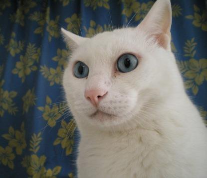 パンタレイ panta 猫 ねこ しろ兄さん パンタ レイ 大田区 池上