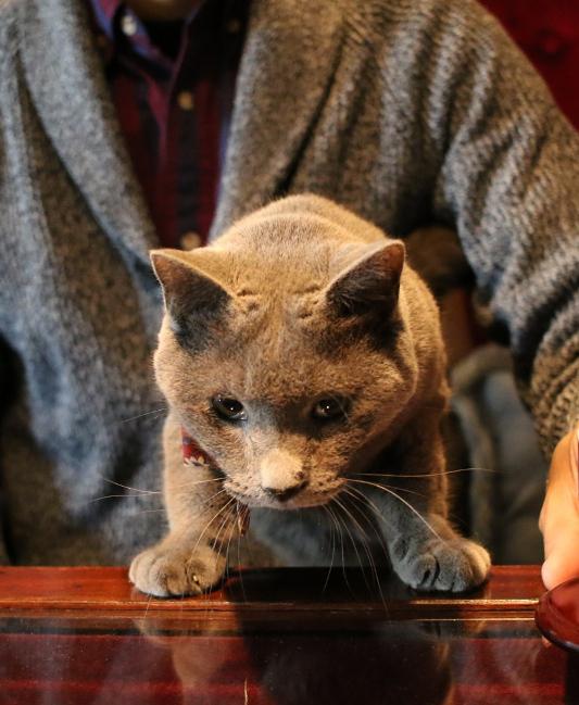 パンタレイ panta 猫 ねこ cat 大田区 池上