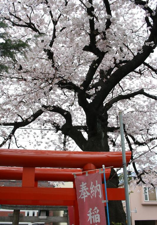 トコリエ tocolier 大田区 長原 東急 池上線 桜 神社 小池稲荷神社