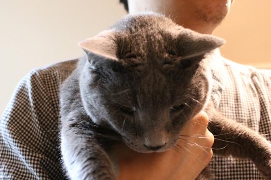パンタレイ panta ギャラリー 猫 店長 ねこ cat ダミアン 大田区 池上