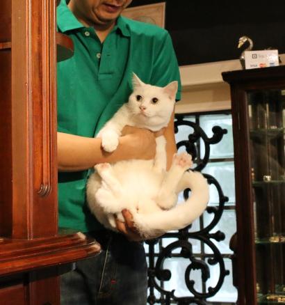 パンタレイ panta 石橋彩 aya ishibashi 個展 大田区 池上 ギャラリー クロワッサイ 猫 ねこ