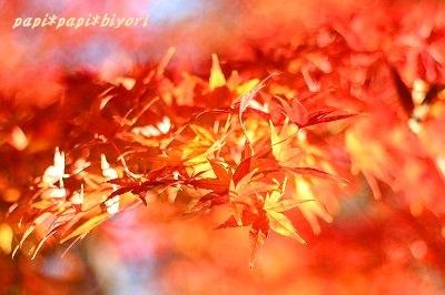 Autumn Park ★1