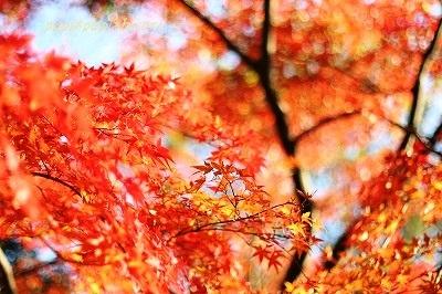 Autumn Park ★2