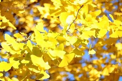 Autumn Park ★4