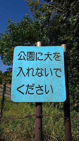 ⑥かえでの谷にある池の目立たない場所には、まだ『公園に犬を入れないでください』の看板がありました。