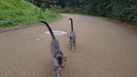 ⑫同時期にこの2匹も違う場所で見かけるようになりました。⑪の写真の猫ちゃんたちと兄弟かもしれません。