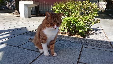 ⑬味のあるボス猫