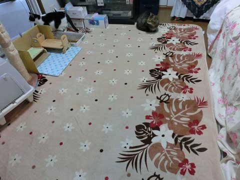 20160319carpet.jpg