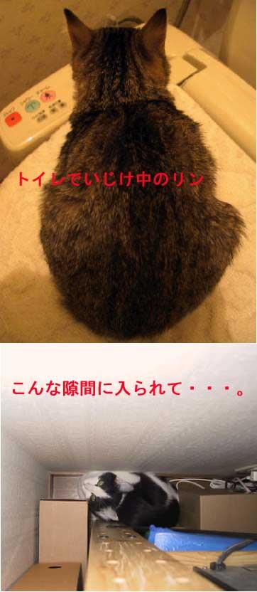 ren hajime20080504155521460[1]