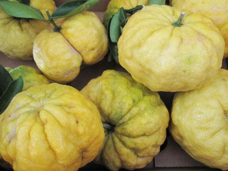 獅子柚子1
