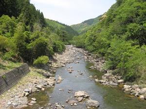 因尾茶 川1