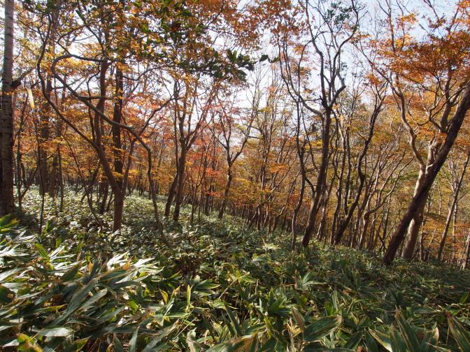 紅葉が進む紋別岳の麓