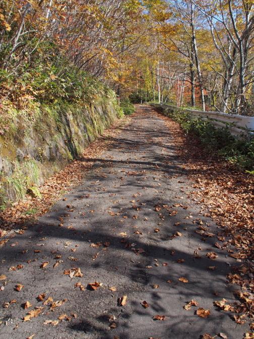 舗装された登山道。歩きやすいが足に負担が掛かる…
