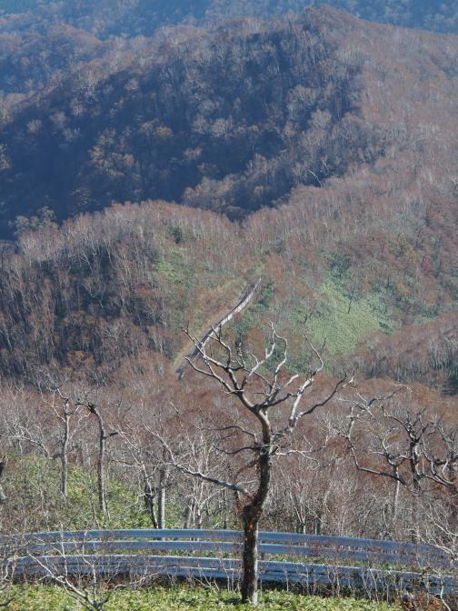 高い防風フェンス…山頂を見上げたあの地点